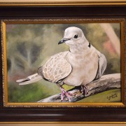 mourning-dove-framed-painting