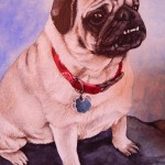 Pug Pet Painted Portrait
