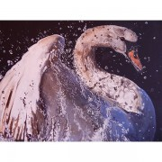 swan-black-featured-image