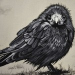 baby-crow