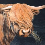 scottish-highland-cow