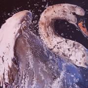 swan-black