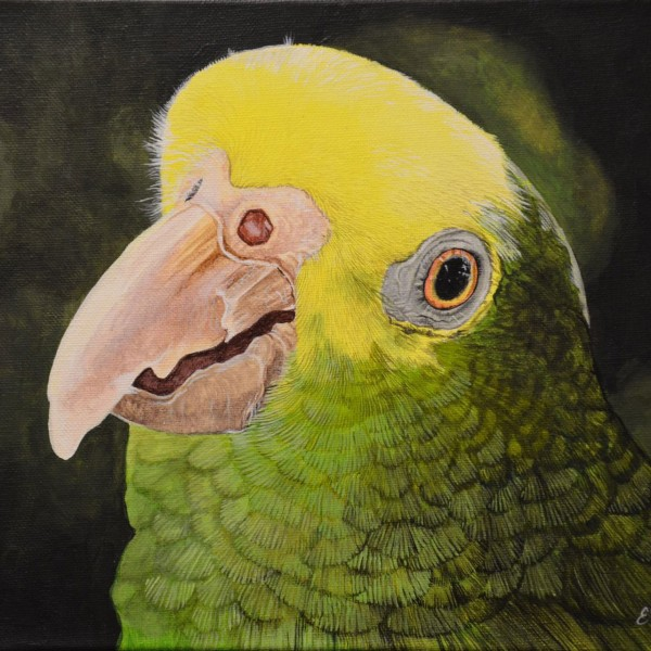 yellow-green-parrot