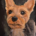 yorkshire-terrier-yorkie-portrait